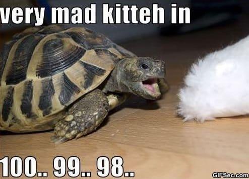 meme-very-mad-kitteh