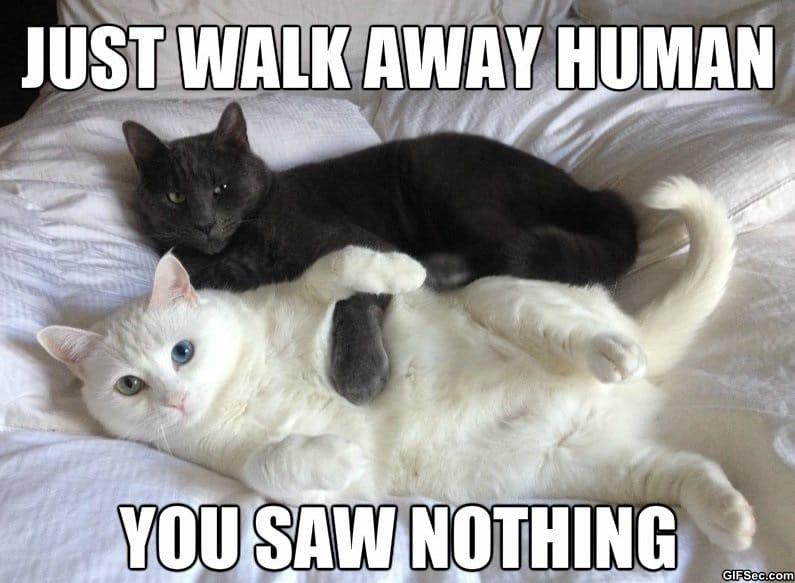 meme-walk-away