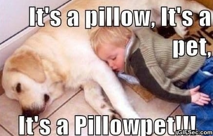 meme-pillowpet