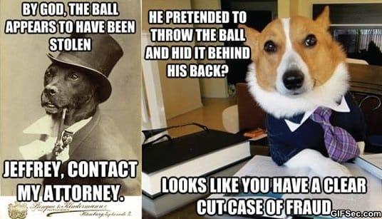meme-dogs