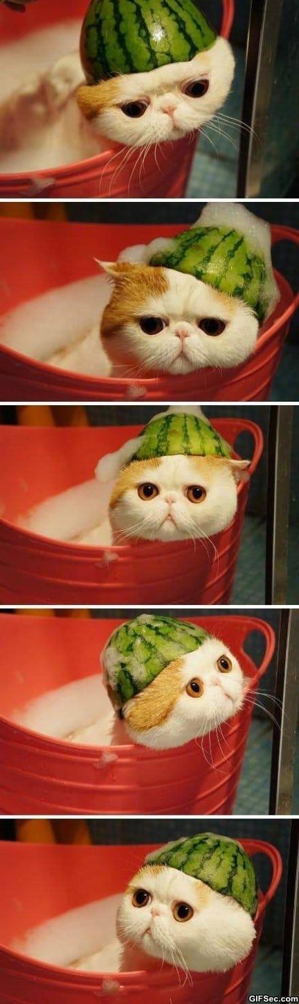 melonhead-taking-a-bath