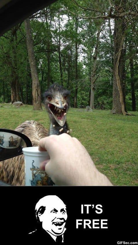 ostrich-likes-free-stuff