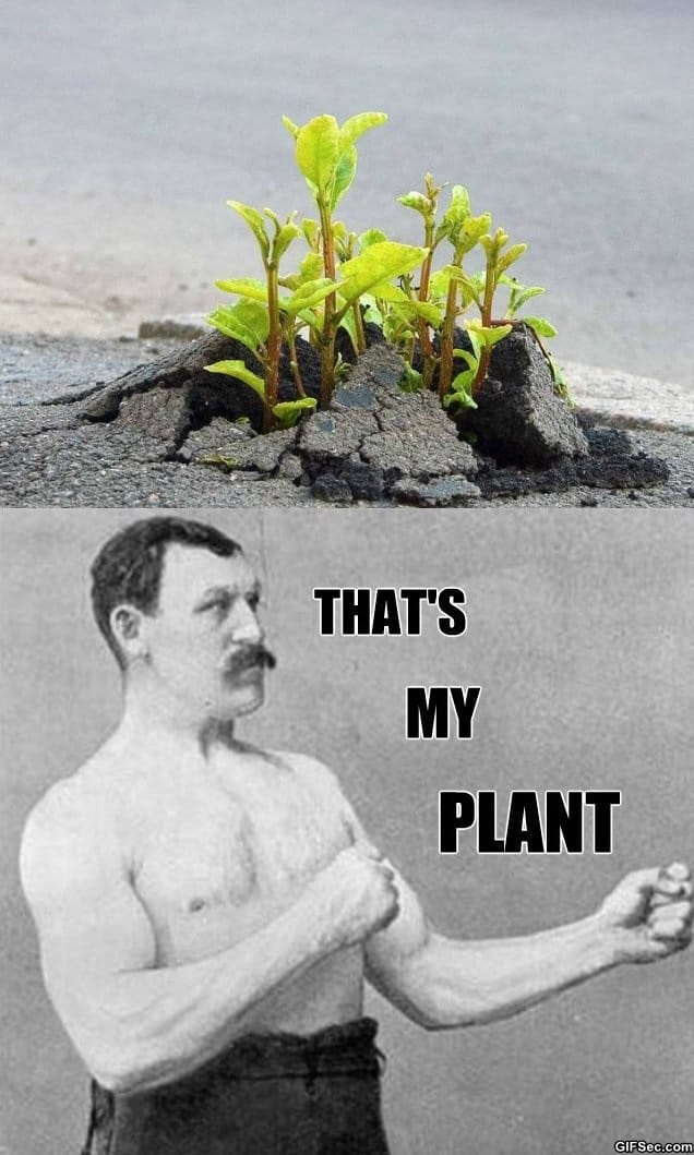 overly-planty-plant
