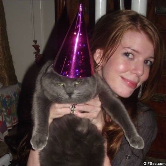 party-cat-is-not-amused
