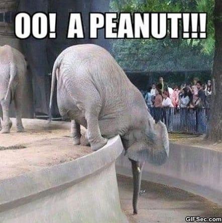 peanut-spotted