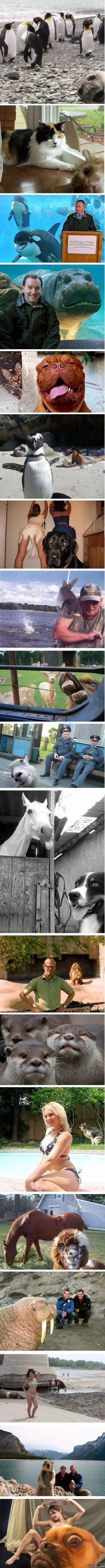 photobombing-animals