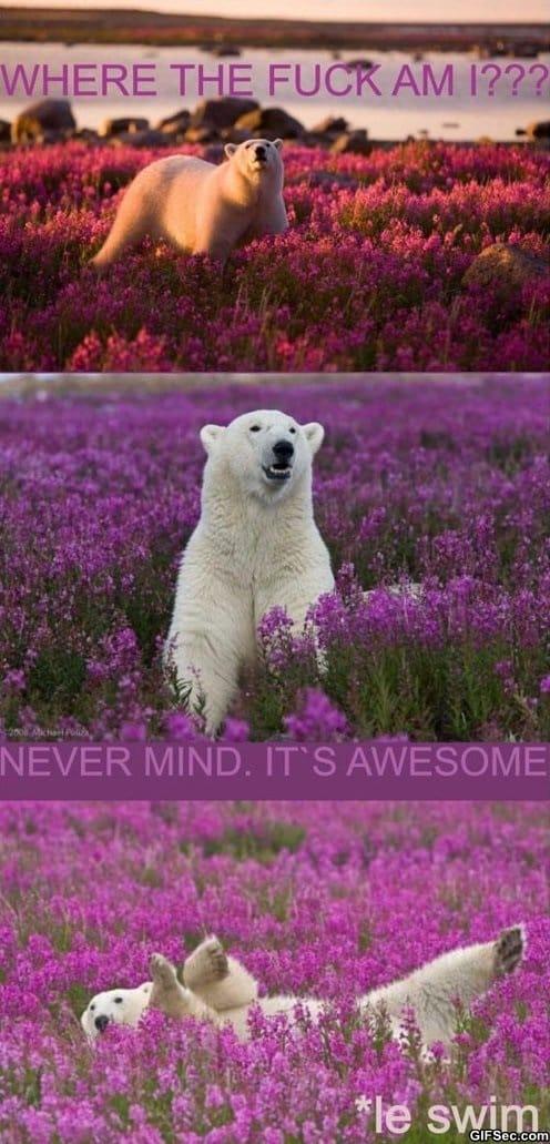 polar-bear-tripping