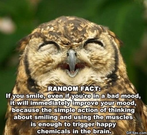 random-fact