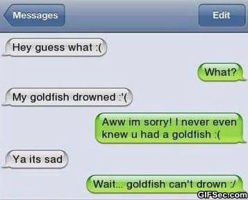 sms-poor-goldfish