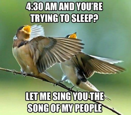 scumbag-birds
