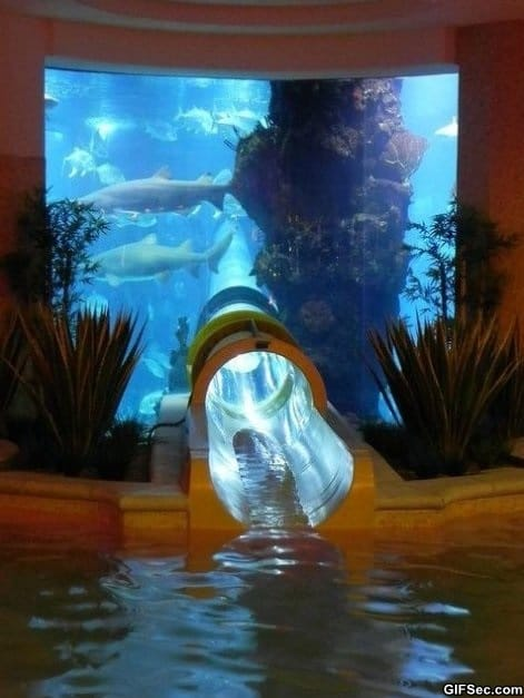 shark-tank-water-slide