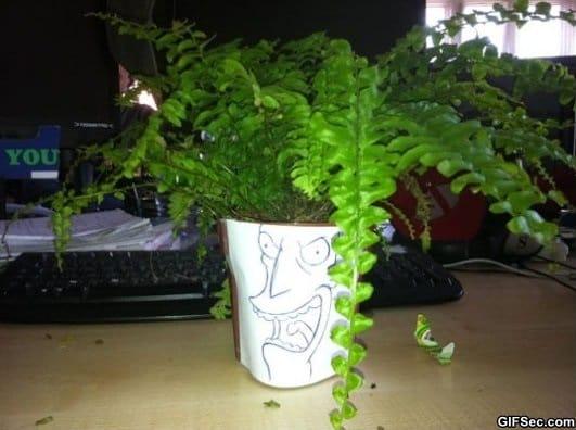 sideshow-fern