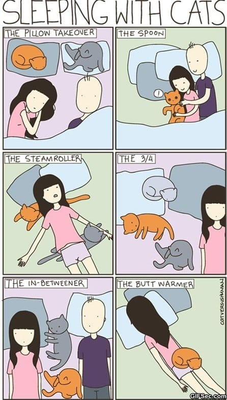 sleeping-with-cats