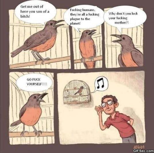 song-birds