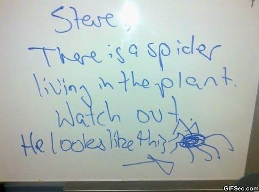 spider-piiiig