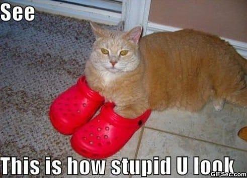 stupid-humans