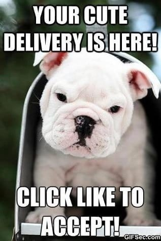 The Delivery meme lol humor funny pictures funny photos funny