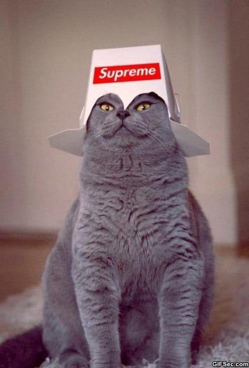 the-supreme-leader