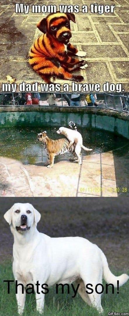 tiger-vs-dog