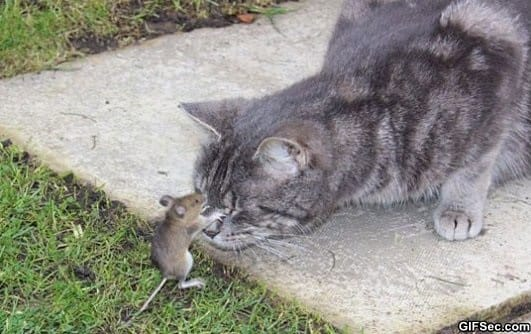 tom-and-jerry-in-real-life