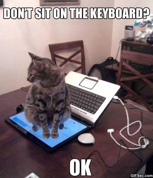 trolling-cat