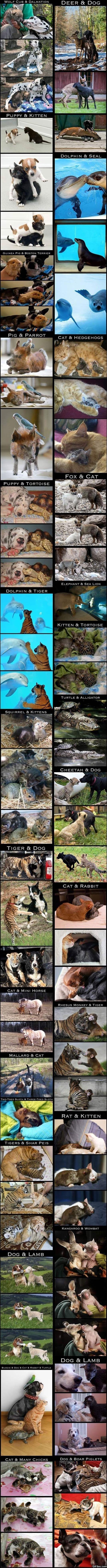 true-friendships