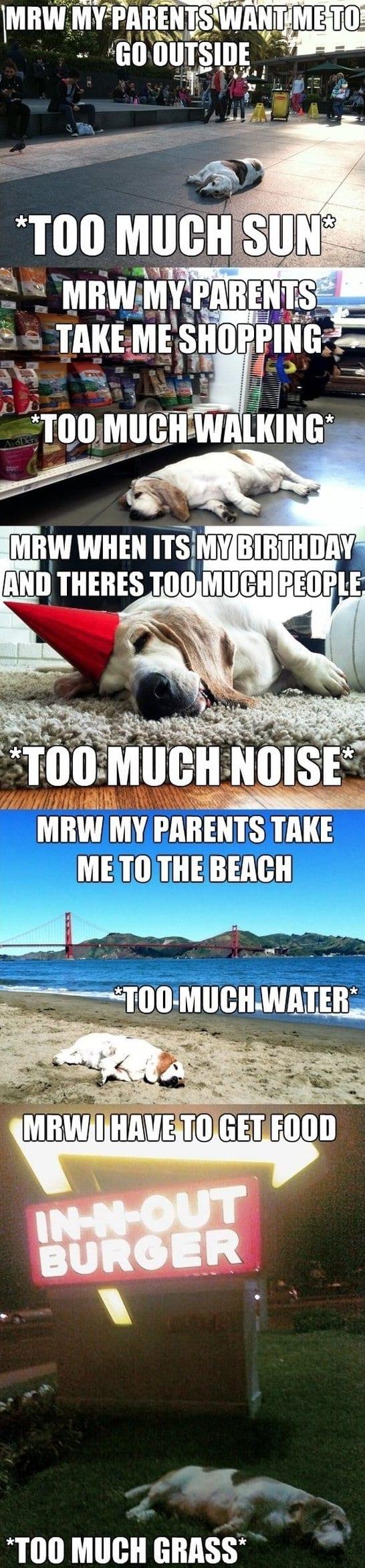 funny-meme-struggles-of-life-lol