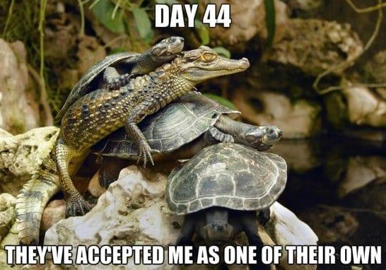 funny-acceptence-meme-jokes-2014