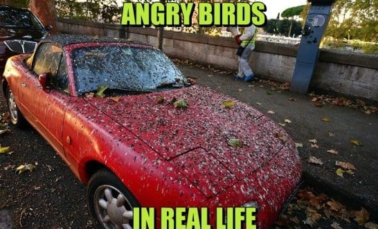 funny-angry-birds-in-real-life-meme-jokes-2014