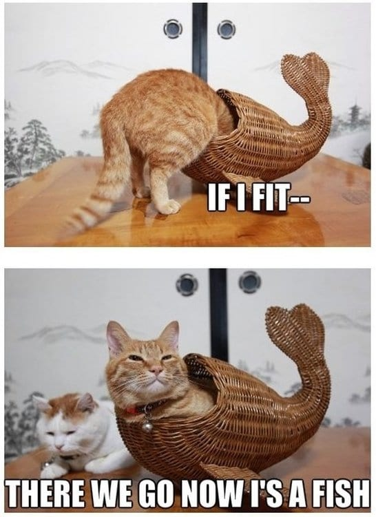 funny-cat-fish-jokes