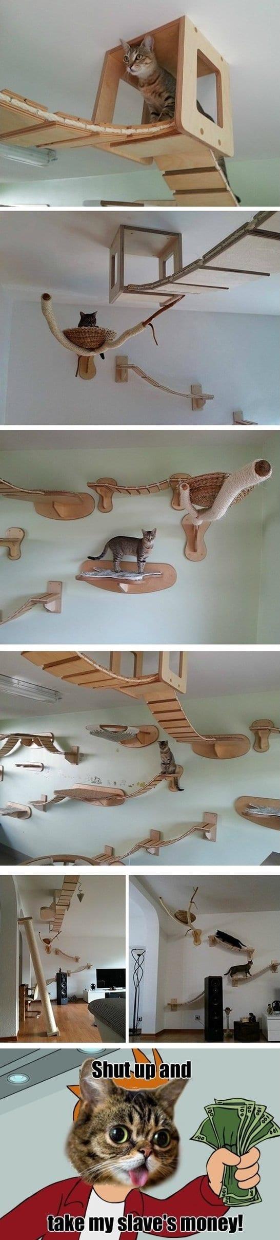 funny cat furniture meme jokes