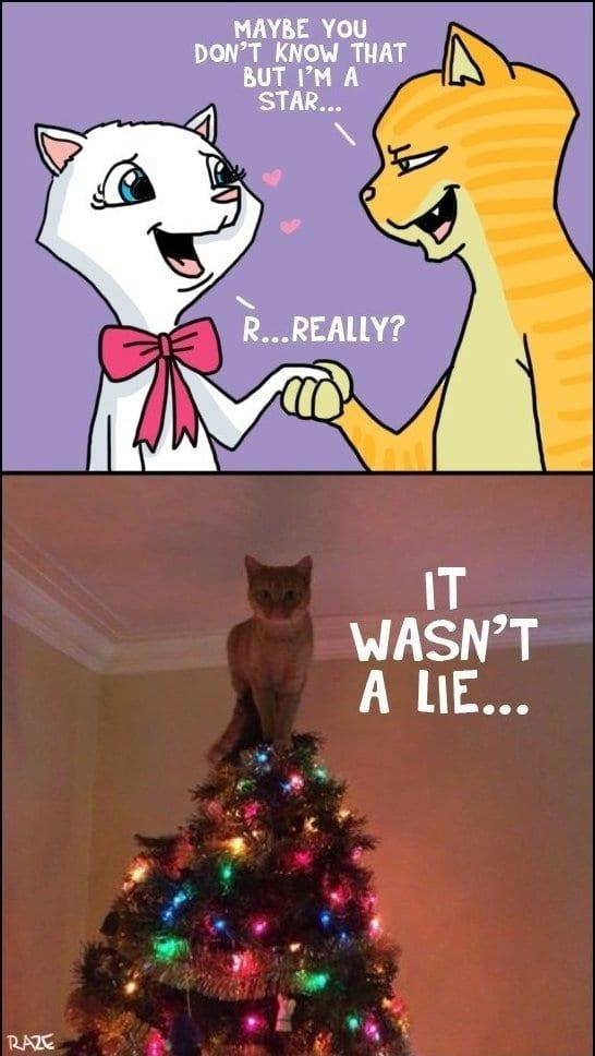 funny-catstar-joke