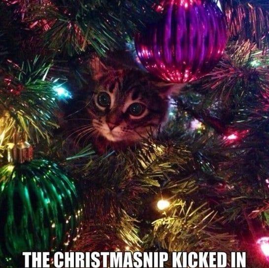 funny-christmasnip-meme