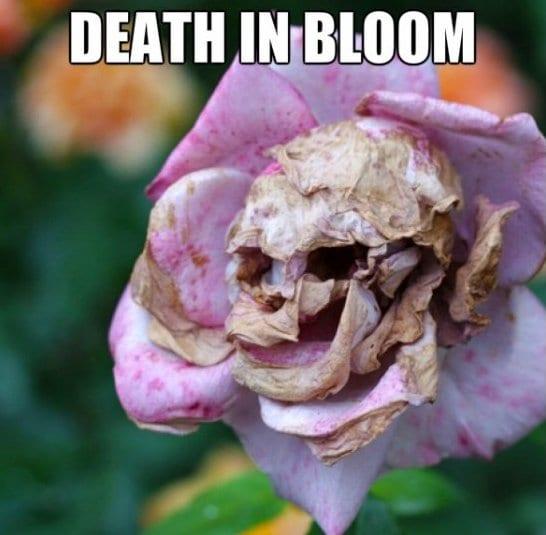 funny-death-in-bloom-meme-jokes