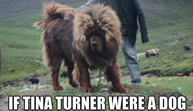 funny-doggy-celebs-meme-lol
