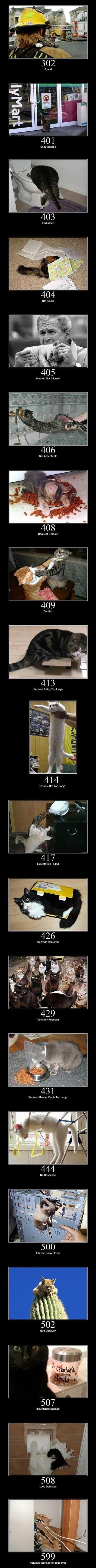 funny-error-cats-meme-jokes