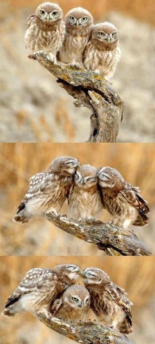 funny-forever-a-third-wheel-funny-pictures-meme-jokes