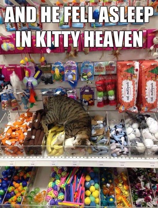 funny-heaven-meme-jokes-2014