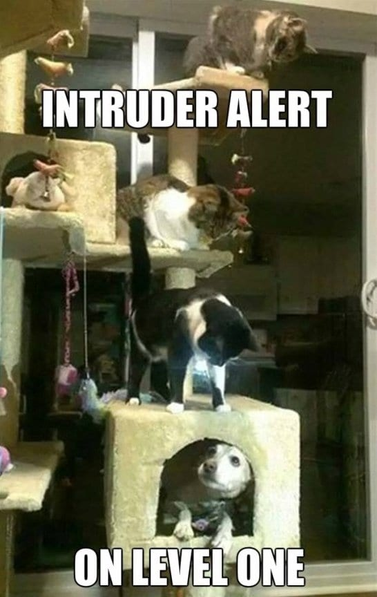 funny-intruder-alert-meme-jokes