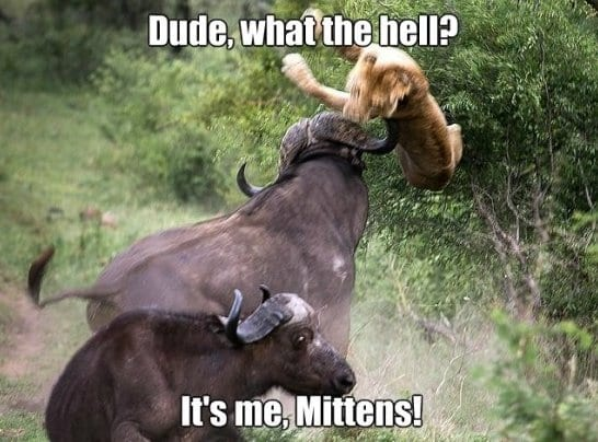 funny-mittens-jokes-meme-funny-pictures