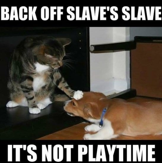 Funniest Memes November 2014 : Funny no meme jokes