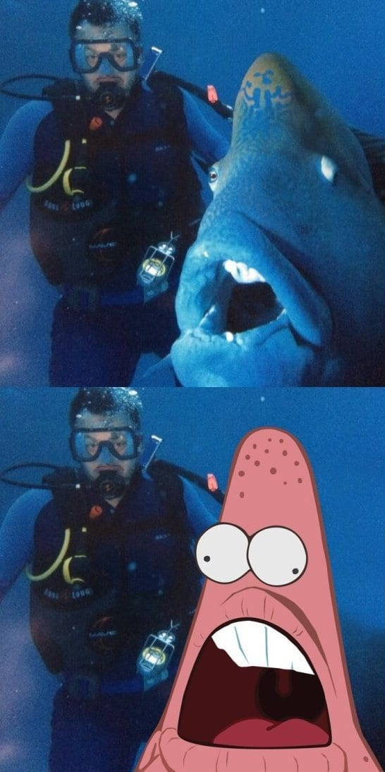 funny-pictures-patfish
