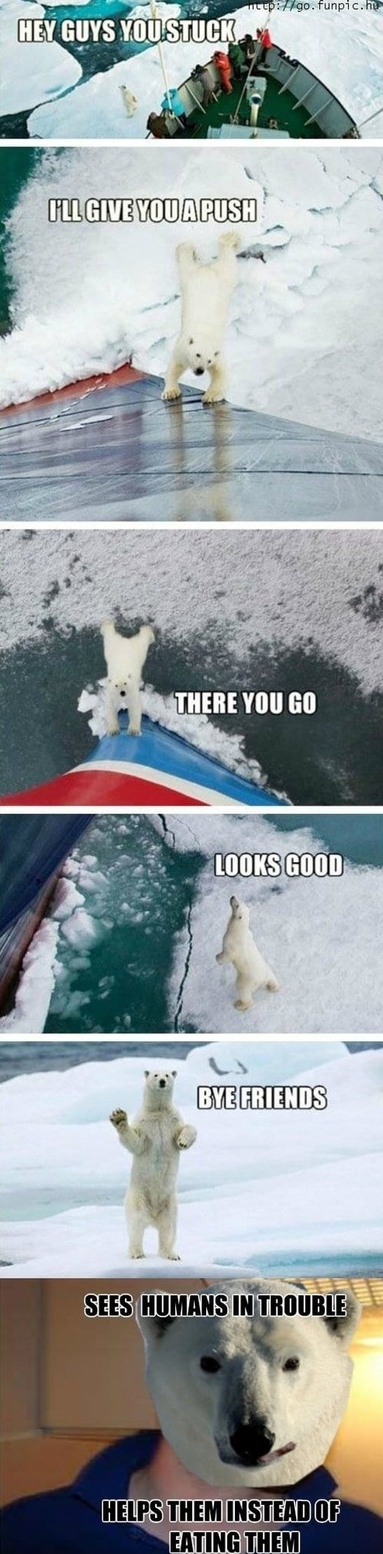 funny-polar-bear-funny-pictures-meme-jokes