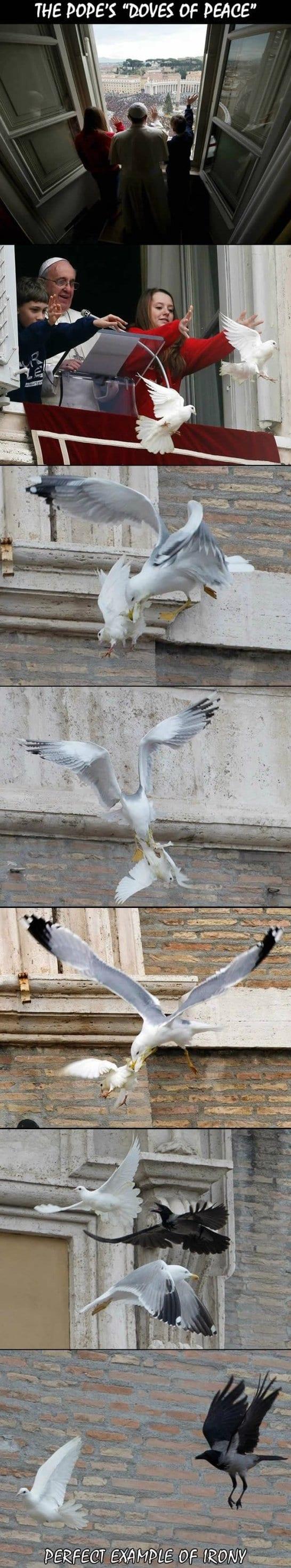 funny-popes-dove-of-peace-meme