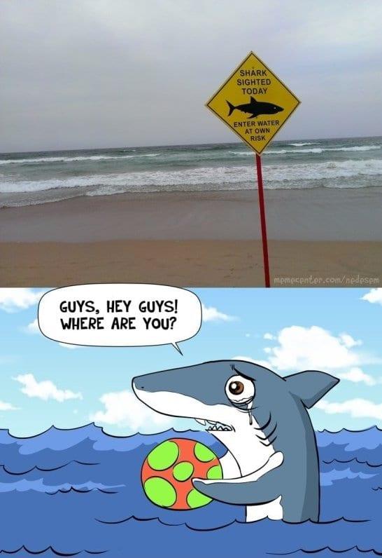 funny-shark-jokes-funny-pictures-meme