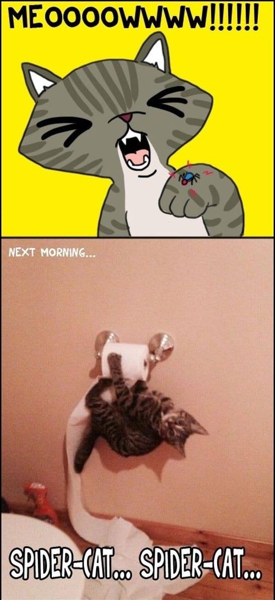 funny-spider-cat-memes
