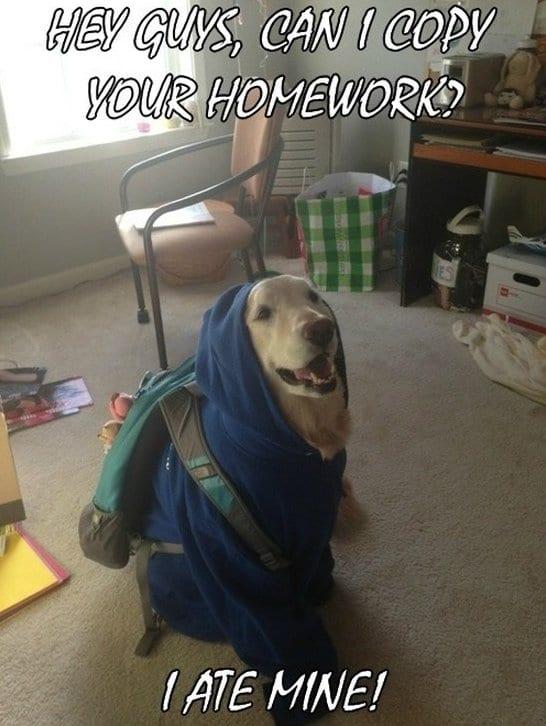 funny-student-dog-joke