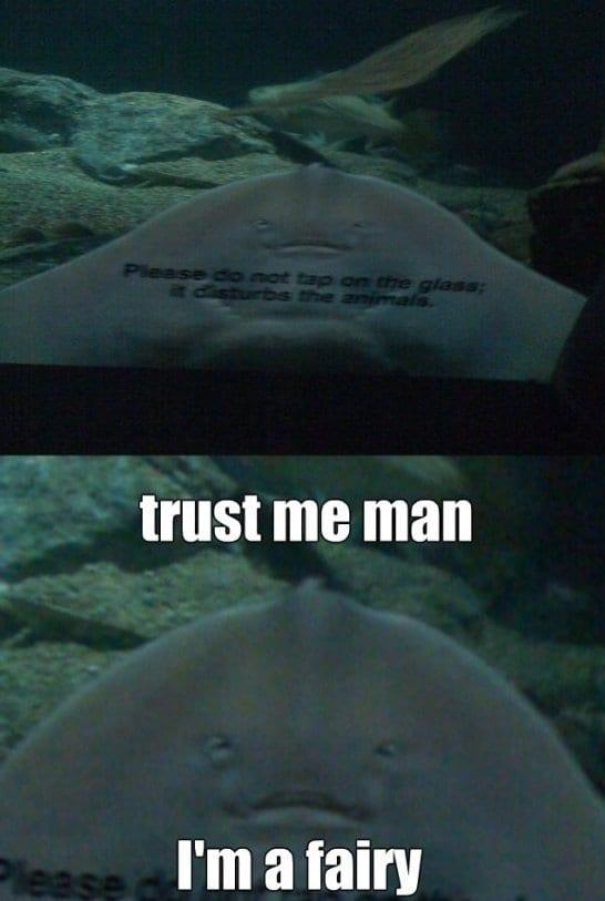 funny-trust-me-man-memes