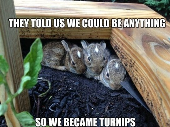 funny-turnip-bunnies-joke