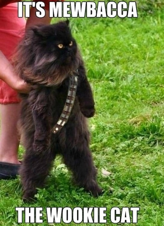funny-wookie-funny-pictures-meme-jokes